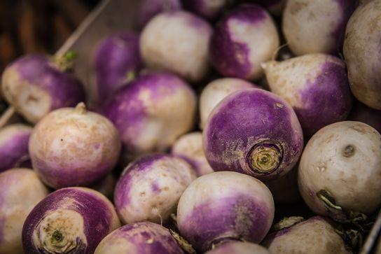 Navet violet Bio
