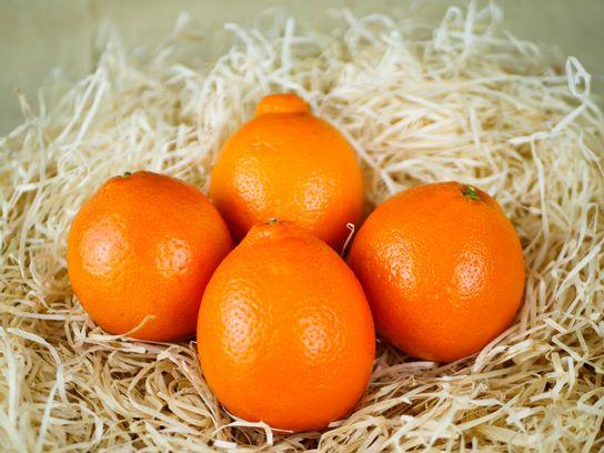 Orange Bollo