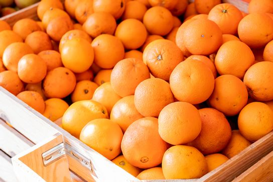 Orange à jus - Potager