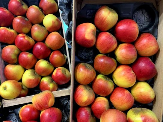 Pomme Reine Des Reinettes Selection