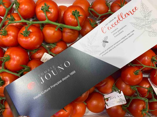 Tomate grappe extra Jounot