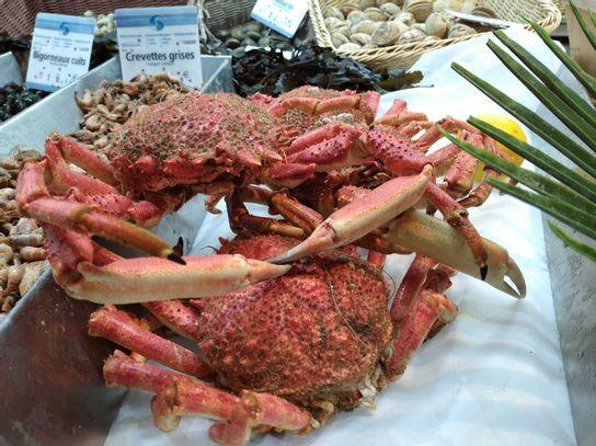 Araignée de mer cuite (P)
