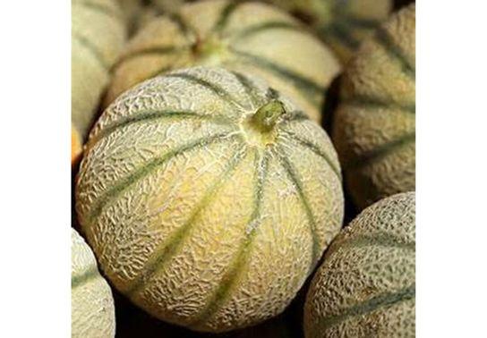 Melon - Boule de Miel