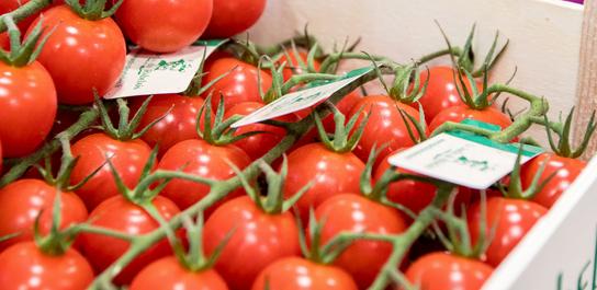 Tomates cerises Rabelais