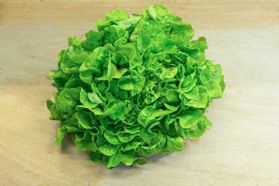 Feuille de chêne salade