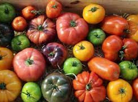 Mélange tomates anciennes - Potager